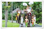 We are provide Bali Tour Package Adventures for your Trips in Bali to experience Bali Elephant Ride Activities with many selection of adventure programs