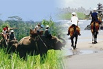 Tour To Bali with Star Bali Tour