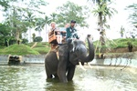 Bali Elephant Ride Activities | Bali Tours