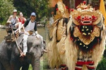 Best Tours Activities in Bali | Bali Best Elephant Ride Tours Activities