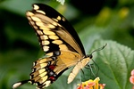 Bali Tours Planer to visit Butterfly Park and Jatiluwih Village and Batukaru Temple at Tabanan Regency