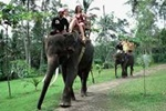Best Bali Activities on Bali Elephant Ride Tour Packages | Star Bali Tour