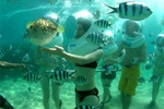 Bali Ocean Walker Tour Activities